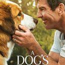 A Dog's Journey (2019) BluRay 480p & 720p